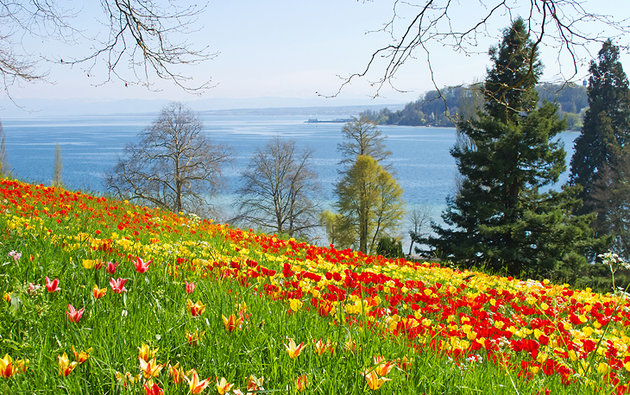 Insel Mainau: the Flower Island of Lake Constance